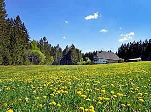 Bärenwald