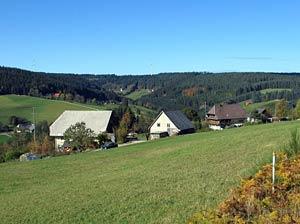 Kohlwald Felsen Leihwies